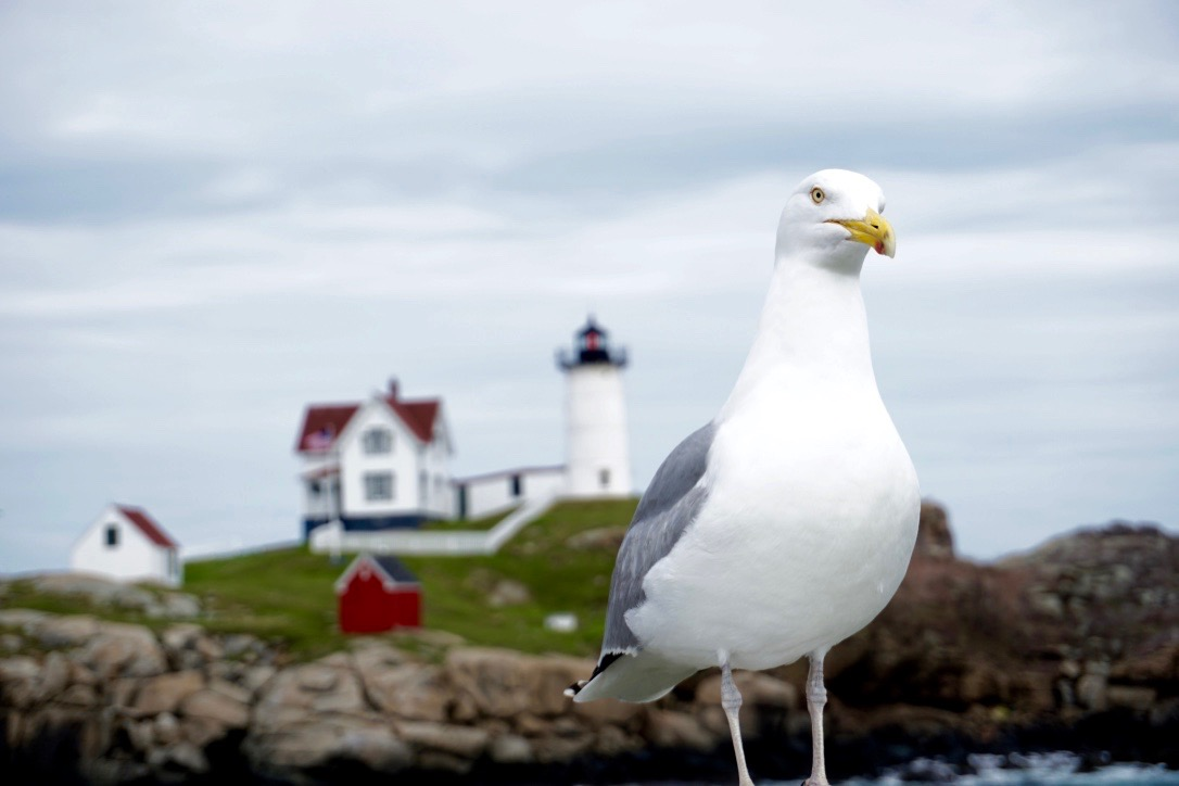 From Historic Boston to Scenic Maine: Inching Our Way North