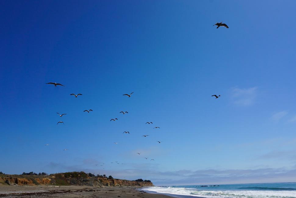 Enjoying nature- Big Sur