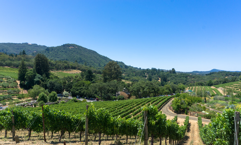 BenzigerWinery- Road trip to Sonoma